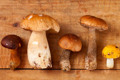 Different sort of wild mushrooms on wooden box Stock Photography