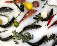 Different sorts of fish on white ice with herbs and lemon on the storefront. royalty free stock images