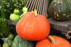 Different sorts pumpkin for thanksgiving Stock Photo