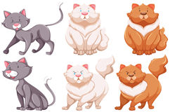 Different specie of cats. Six different specie of cats on a white background Stock Photography