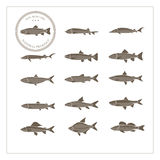 Different species of fish. On a white background label example and different fish species Royalty Free Stock Photo