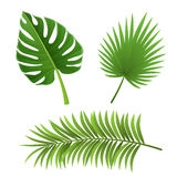 Different species of palm tree leaves isolated on white. Different species of green palm tree leaf set, vector illustration isolated on white. For exotic and Royalty Free Stock Photography