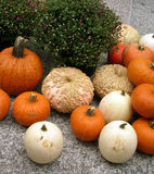 halloween pumpkins different species Royalty Free Stock Photography