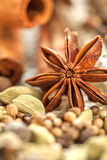 Different spices assortment: cinnamon cardamom pepper illicum Royalty Free Stock Image