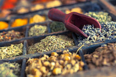 Different Spices and herbs including Lavender. Close-up of different Spices and herbs including Lavender Stock Image