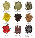 Different spices set Stock Photography