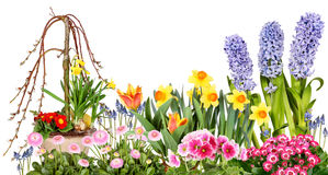 Different spring flowers royalty free stock image