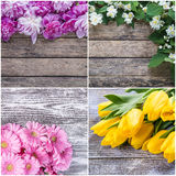Different Spring Flowers Stock Images