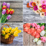 Different Spring Flowers Stock Photography