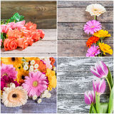 Different Spring Flowers Royalty Free Stock Photo