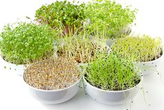 Different sprouts in white bowls royalty free stock photography