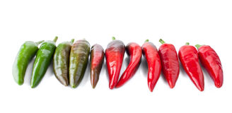 Different Stage of Ripeness by Hot Peppers Royalty Free Stock Photo