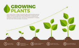 Different steps of growing plants. Vector illustration in cartoon style. Cultivation and botanical, step growing order Stock Image
