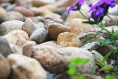 Different stones Royalty Free Stock Photos