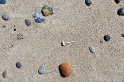 Different stones and a vortex of a fish. Some different stones and a vortex of a fish lying in the sun on the sandy beach at Darsser Ort, Germany royalty free stock image