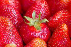 Different strawberry business concept with leadership in team Stock Image