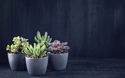 Different succulents Royalty Free Stock Photos