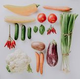 Different tasty fresh vegetables on White Backrgound Top View Royalty Free Stock Photography