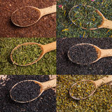 Different tea types: green, black, chamomile, mint, rooibos with wooden spoons Stock Photography