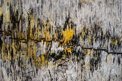 Different textures on wood produced by fungy, mold royalty free stock photo