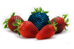 Different than the rest alone blue strawberry.Concept for genetically modified food Stock Photos
