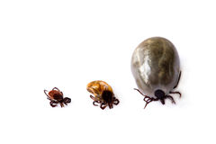Different ticks. Three different ticks on white background royalty free stock image