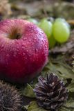 Autumn fruit composition royalty free stock photography