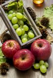 Autumn fruit composition stock images