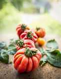 Different tomatoes on a branch with leaves, on a natural background, close up Royalty Free Stock Photos