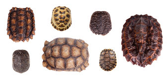 Different Tortoiseshells on white Stock Photography