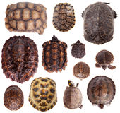 Different Tortoiseshells on white Royalty Free Stock Images