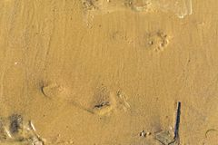 Tracks and Prints in dry sand by animals and humans. Different tracks in the dry sand early morning, birds and other tracks like dogs, birds, macro photoghraphy Royalty Free Stock Photography