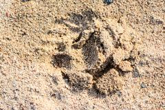 Tracks and Prints in the sand by animals and humans. Different tracks in the sand early morning, birds and other tracks like dogs, birds, macro photoghraphy Royalty Free Stock Images