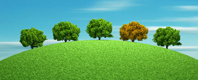 Different tree Royalty Free Stock Photo