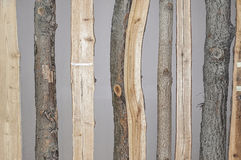 Different tree barks and cross sections Stock Image