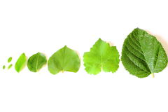 Different Tree Leaves Stock Photos