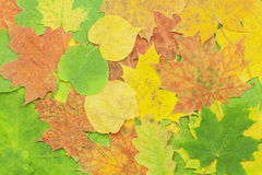 Different tree leaves Royalty Free Stock Photos