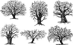 Different trees. Vector drawing og a different trees Royalty Free Stock Images