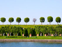 Different trees Royalty Free Stock Photos