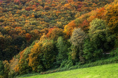 Different Trees Autumn Forest Stock Photography