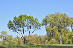 different trees at glade Royalty Free Stock Photography