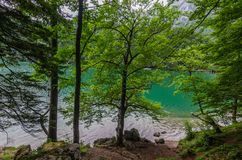 different trees at the lake stock photos