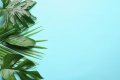 Different tropical leaves on color background Stock Photography
