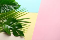 Different tropical leaves on color background. Top view stock photo