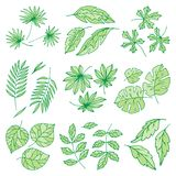 Different tropical leaves summer green exotic jungle palm leaf nature plant botanical hawaii flora vector illustration. Royalty Free Stock Image