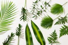 Different tropical leaves on white background.  stock photo