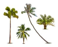 Different tropical palm trees. Vector Royalty Free Stock Photos