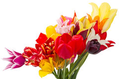 Different tulips Stock Photography