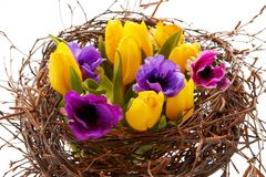 Different tulips in brown branches Stock Images