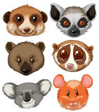 Different type of animal heads. Illustration Royalty Free Stock Photo